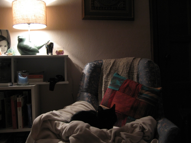 and Britches at home this morning-she likes to sit in the chair after I get up from it